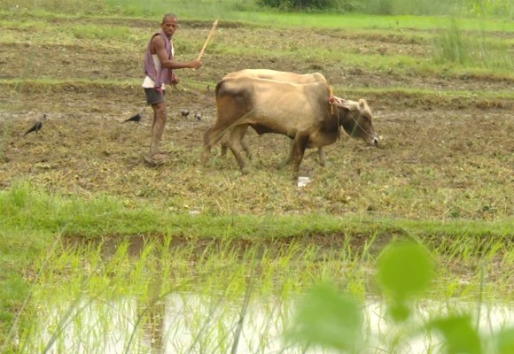 COVID-19 hinders rice planting, threatening food security in India and Nepal