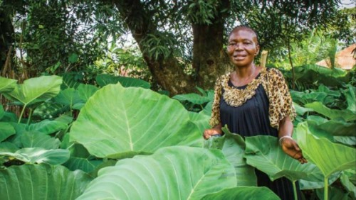 Anastasie Tshimbila was one of the first people trained in IMA's nutrition program in DRC to feed malnourished infants and to do gardening. (Photo by Crystal Stafford)
